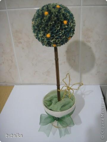 апельсиновое деревце! фото 1
