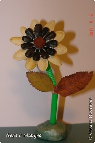 Цветы и подсолнух из тыквенных семечек фото 4