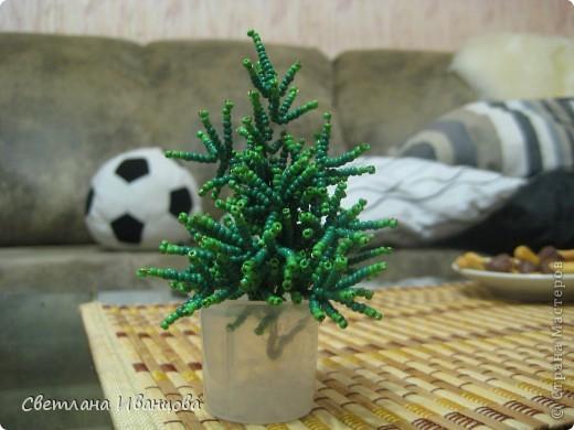 Денежное дерево, выросло из мешка с деньгами ;-) фото 4