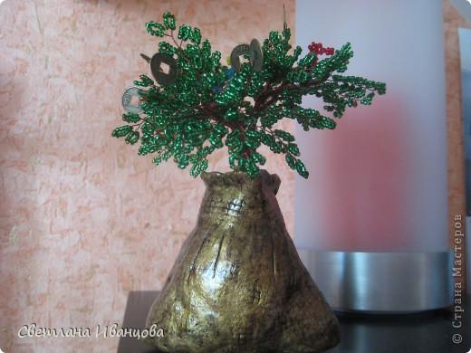 Денежное дерево, выросло из мешка с деньгами ;-) фото 1