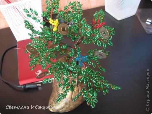 Денежное дерево, выросло из мешка с деньгами ;-) фото 2