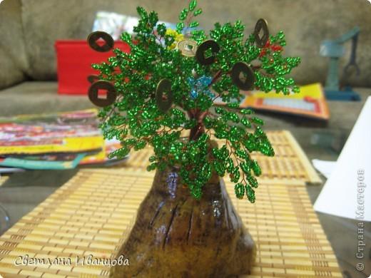 Денежное дерево, выросло из мешка с деньгами ;-) фото 3