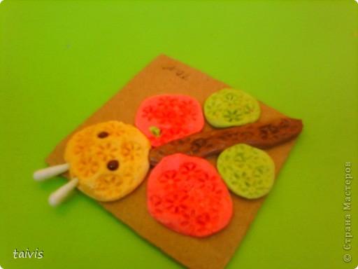 Разноцветные осьминоги. фото 14