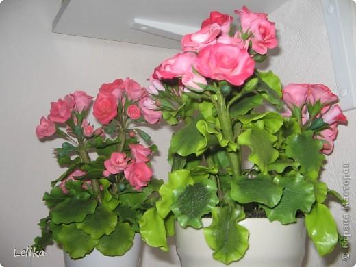Уважаемые мастерицы! У меня от первой гераньки осталось много листочков и цветочков, хватило на вторую. Наконец-то собрала и посадила. Они очень похожи друг на друга, отличаются лишь тем, что вторая покрыта лаком, и цветочки чуть-чуть темнее внутри. Спасибо всем, кто зашел ко мне в гости. фото 4