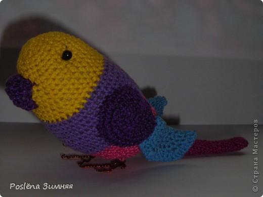 Весёлый попугайчик фото 3