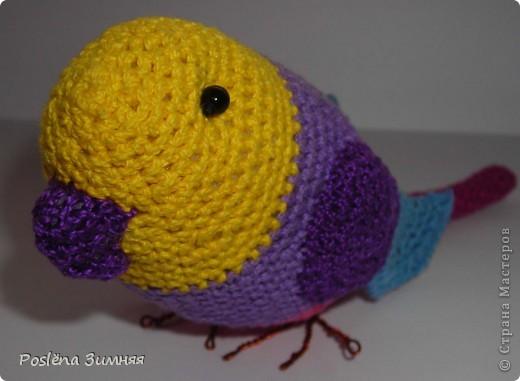 Весёлый попугайчик фото 1