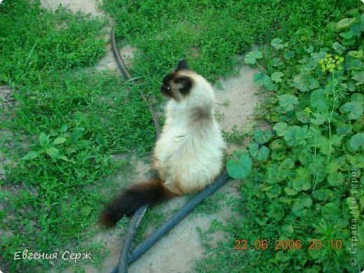 Я кот РИККИ наблюдаю за поливом остальным некогда фото 1