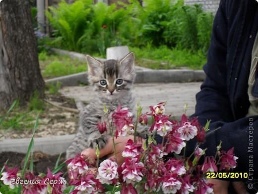 Я кот РИККИ наблюдаю за поливом остальным некогда фото 5