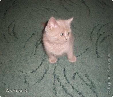 Всем привет! Меня зовут Ричард, но я пока еще маленький, и хозяева называют меня ласково Ричик. фото 2