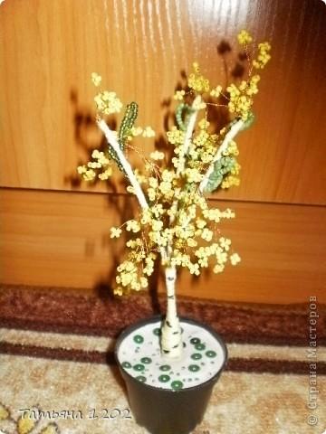 Очень захотелось иметь дома маленькую рябинку.Красивое дерево ,особенно осенью с красными ягодками. фото 2