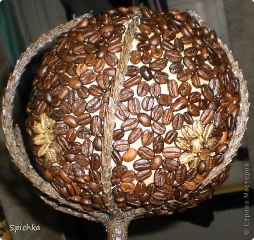 мое кофейное дерево фото 3