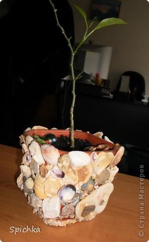 Решила я посадить цветочек...и захотелось мне какой-нибудь красивенький гаршочек. Пошла на море, насобирала камушков, ракушек и .... вот, что вышло. фото 1
