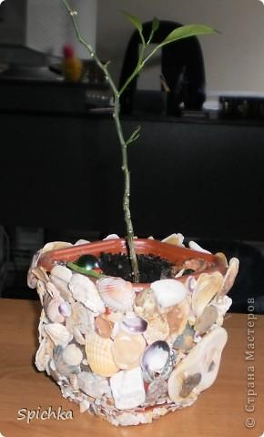 Решила я посадить цветочек...и захотелось мне какой-нибудь красивенький гаршочек. Пошла на море, насобирала камушков, ракушек и .... вот, что вышло. фото 3