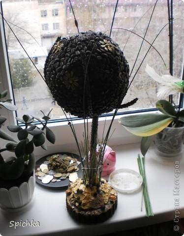 мое кофейное дерево фото 8
