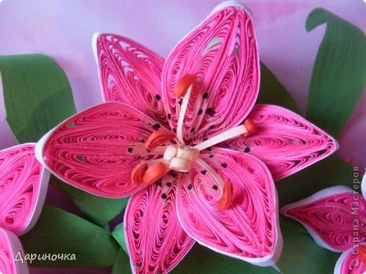 Розовые лилии (квиллинг) фото 2