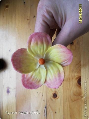 Мой цветочек фото 1