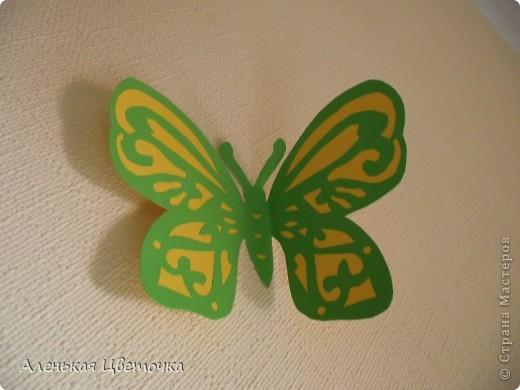 Бабочки фото 9