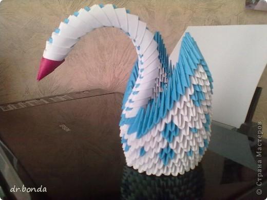 один из лебедей фото 2