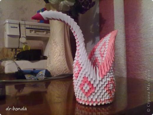один из лебедей фото 9