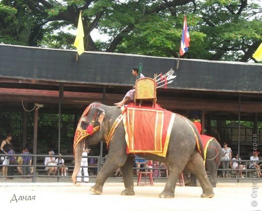 """""""По улицам Слона водили, Как видно напоказ - Известно, что Слоны в диковинку у нас """"... (И. Крылов)  Именно поэтому я и решила показать жителям Страны мастеров фотографии,   сделанные мной на шоу слонов в Тайланде. фото 2"""