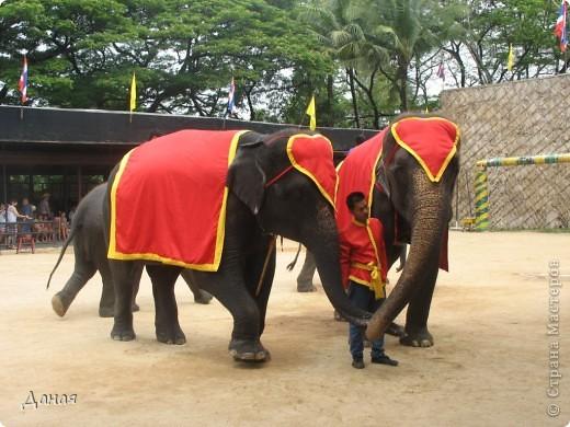 """""""По улицам Слона водили, Как видно напоказ - Известно, что Слоны в диковинку у нас """"... (И. Крылов)  Именно поэтому я и решила показать жителям Страны мастеров фотографии,   сделанные мной на шоу слонов в Тайланде. фото 3"""