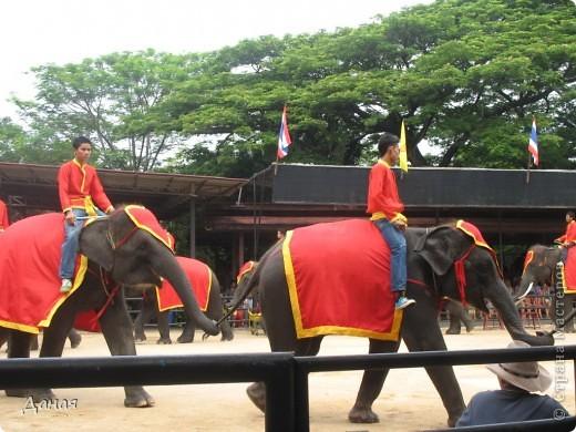 """""""По улицам Слона водили, Как видно напоказ - Известно, что Слоны в диковинку у нас """"... (И. Крылов)  Именно поэтому я и решила показать жителям Страны мастеров фотографии,   сделанные мной на шоу слонов в Тайланде. фото 5"""