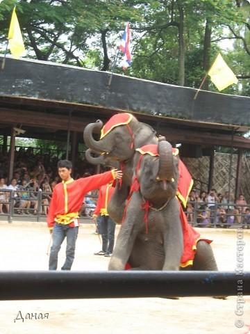 """""""По улицам Слона водили, Как видно напоказ - Известно, что Слоны в диковинку у нас """"... (И. Крылов)  Именно поэтому я и решила показать жителям Страны мастеров фотографии,   сделанные мной на шоу слонов в Тайланде. фото 6"""