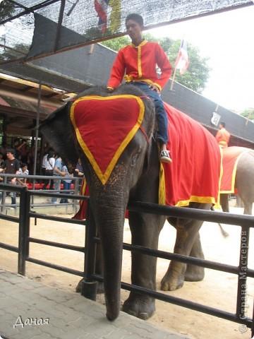 """""""По улицам Слона водили, Как видно напоказ - Известно, что Слоны в диковинку у нас """"... (И. Крылов)  Именно поэтому я и решила показать жителям Страны мастеров фотографии,   сделанные мной на шоу слонов в Тайланде. фото 1"""