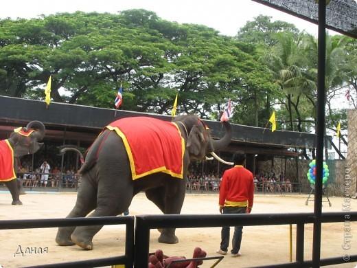 """""""По улицам Слона водили, Как видно напоказ - Известно, что Слоны в диковинку у нас """"... (И. Крылов)  Именно поэтому я и решила показать жителям Страны мастеров фотографии,   сделанные мной на шоу слонов в Тайланде. фото 9"""