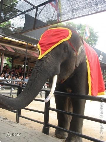 """""""По улицам Слона водили, Как видно напоказ - Известно, что Слоны в диковинку у нас """"... (И. Крылов)  Именно поэтому я и решила показать жителям Страны мастеров фотографии,   сделанные мной на шоу слонов в Тайланде. фото 10"""