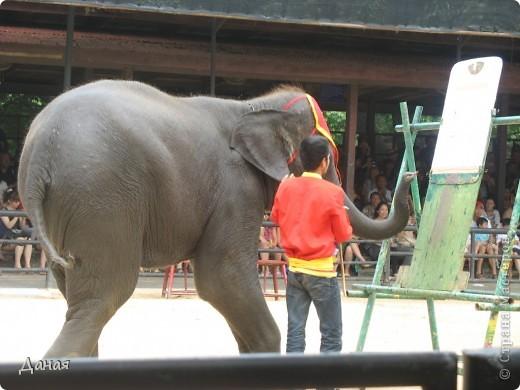 """""""По улицам Слона водили, Как видно напоказ - Известно, что Слоны в диковинку у нас """"... (И. Крылов)  Именно поэтому я и решила показать жителям Страны мастеров фотографии,   сделанные мной на шоу слонов в Тайланде. фото 11"""