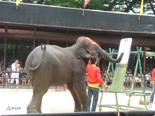 """""""По улицам Слона водили, Как видно напоказ - Известно, что Слоны в диковинку у нас """"... (И. Крылов)  Именно поэтому я и решила показать жителям Страны мастеров фотографии,   сделанные мной на шоу слонов в Тайланде. фото 12"""