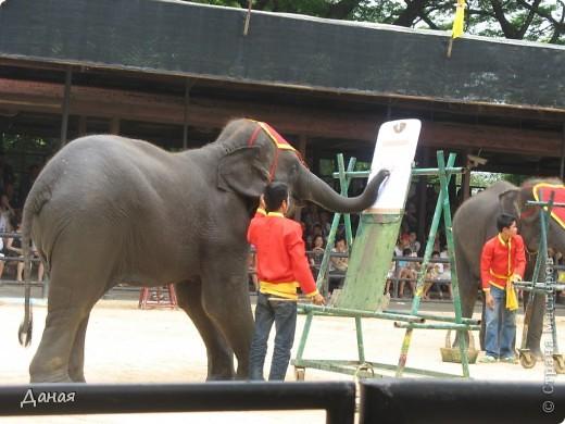 """""""По улицам Слона водили, Как видно напоказ - Известно, что Слоны в диковинку у нас """"... (И. Крылов)  Именно поэтому я и решила показать жителям Страны мастеров фотографии,   сделанные мной на шоу слонов в Тайланде. фото 13"""