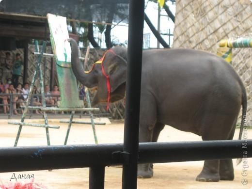 """""""По улицам Слона водили, Как видно напоказ - Известно, что Слоны в диковинку у нас """"... (И. Крылов)  Именно поэтому я и решила показать жителям Страны мастеров фотографии,   сделанные мной на шоу слонов в Тайланде. фото 14"""