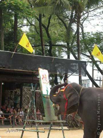 """""""По улицам Слона водили, Как видно напоказ - Известно, что Слоны в диковинку у нас """"... (И. Крылов)  Именно поэтому я и решила показать жителям Страны мастеров фотографии,   сделанные мной на шоу слонов в Тайланде. фото 15"""