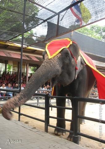 """""""По улицам Слона водили, Как видно напоказ - Известно, что Слоны в диковинку у нас """"... (И. Крылов)  Именно поэтому я и решила показать жителям Страны мастеров фотографии,   сделанные мной на шоу слонов в Тайланде. фото 18"""