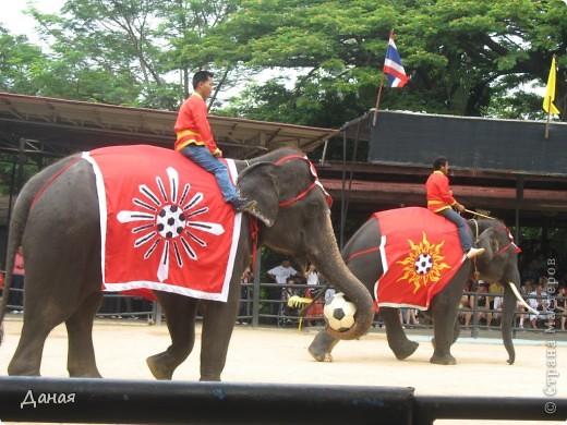 """""""По улицам Слона водили, Как видно напоказ - Известно, что Слоны в диковинку у нас """"... (И. Крылов)  Именно поэтому я и решила показать жителям Страны мастеров фотографии,   сделанные мной на шоу слонов в Тайланде. фото 24"""