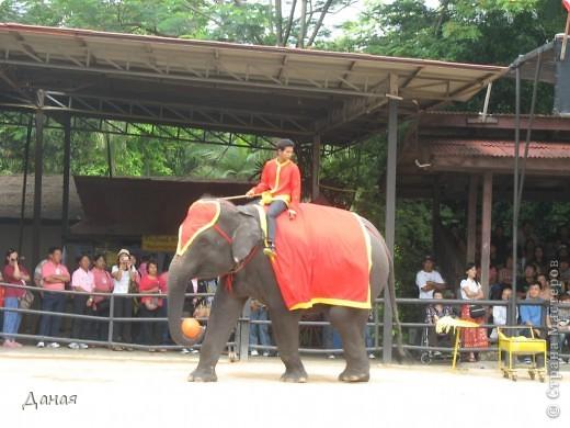 """""""По улицам Слона водили, Как видно напоказ - Известно, что Слоны в диковинку у нас """"... (И. Крылов)  Именно поэтому я и решила показать жителям Страны мастеров фотографии,   сделанные мной на шоу слонов в Тайланде. фото 25"""