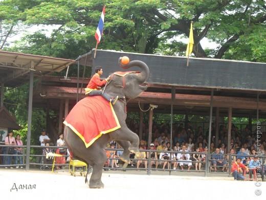 """""""По улицам Слона водили, Как видно напоказ - Известно, что Слоны в диковинку у нас """"... (И. Крылов)  Именно поэтому я и решила показать жителям Страны мастеров фотографии,   сделанные мной на шоу слонов в Тайланде. фото 26"""