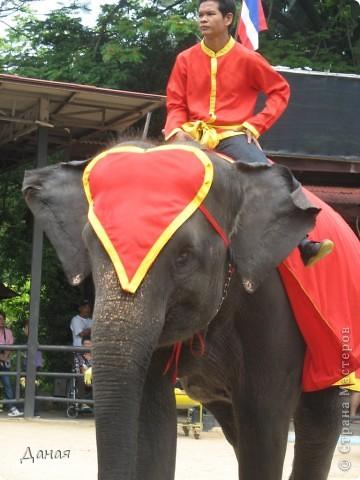"""""""По улицам Слона водили, Как видно напоказ - Известно, что Слоны в диковинку у нас """"... (И. Крылов)  Именно поэтому я и решила показать жителям Страны мастеров фотографии,   сделанные мной на шоу слонов в Тайланде. фото 28"""
