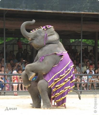 """""""По улицам Слона водили, Как видно напоказ - Известно, что Слоны в диковинку у нас """"... (И. Крылов)  Именно поэтому я и решила показать жителям Страны мастеров фотографии,   сделанные мной на шоу слонов в Тайланде. фото 29"""