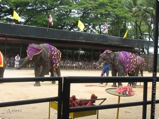 """""""По улицам Слона водили, Как видно напоказ - Известно, что Слоны в диковинку у нас """"... (И. Крылов)  Именно поэтому я и решила показать жителям Страны мастеров фотографии,   сделанные мной на шоу слонов в Тайланде. фото 30"""
