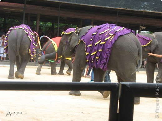 """""""По улицам Слона водили, Как видно напоказ - Известно, что Слоны в диковинку у нас """"... (И. Крылов)  Именно поэтому я и решила показать жителям Страны мастеров фотографии,   сделанные мной на шоу слонов в Тайланде. фото 31"""