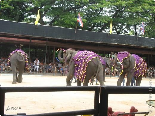 """""""По улицам Слона водили, Как видно напоказ - Известно, что Слоны в диковинку у нас """"... (И. Крылов)  Именно поэтому я и решила показать жителям Страны мастеров фотографии,   сделанные мной на шоу слонов в Тайланде. фото 32"""