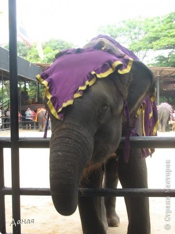 """""""По улицам Слона водили, Как видно напоказ - Известно, что Слоны в диковинку у нас """"... (И. Крылов)  Именно поэтому я и решила показать жителям Страны мастеров фотографии,   сделанные мной на шоу слонов в Тайланде. фото 33"""