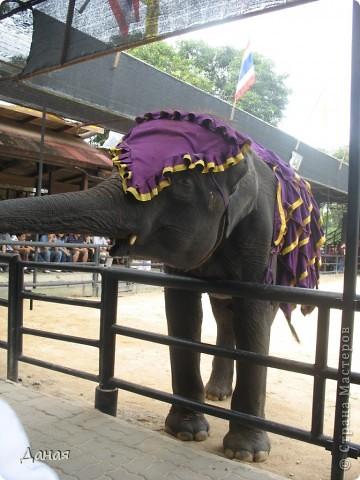 """""""По улицам Слона водили, Как видно напоказ - Известно, что Слоны в диковинку у нас """"... (И. Крылов)  Именно поэтому я и решила показать жителям Страны мастеров фотографии,   сделанные мной на шоу слонов в Тайланде. фото 34"""