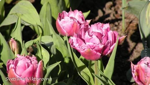 сказочный мир цветов фото 2