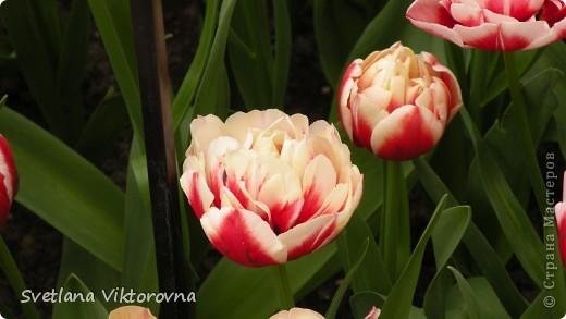 сказочный мир цветов фото 4