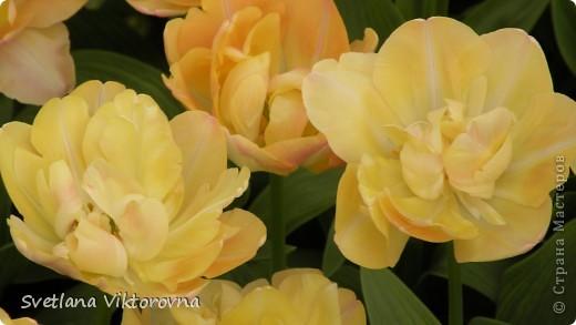 сказочный мир цветов фото 11