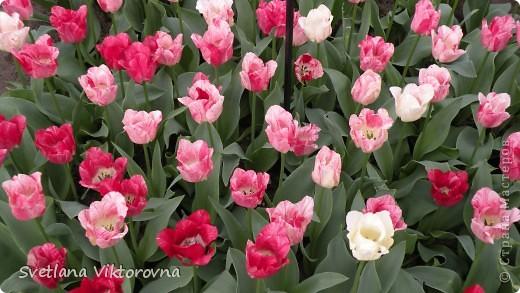 сказочный мир цветов фото 12
